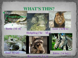 WHAT'S THIS? Turtle ['tɜːtl] Lion ['laɪən] Zebra ['ziːbrə] Toad [təud] Racc