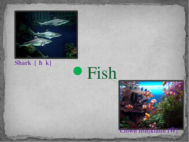 Fish Shark [ʃɑːk] Clown fish[klaun fɪʃ]