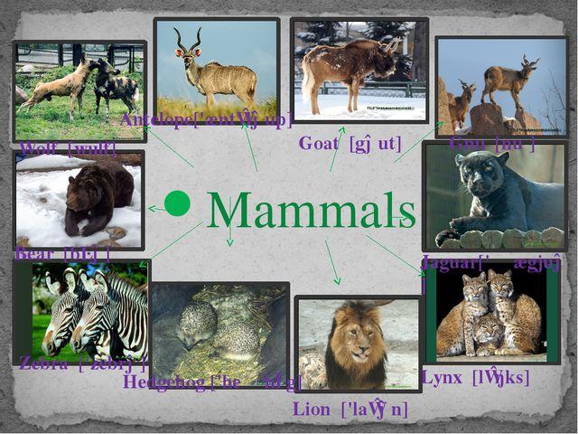 Mammals Bear [bɛə] Wolf [wulf] Antelope['æntɪləup] Goat [gəut] Gnu [nuː]...