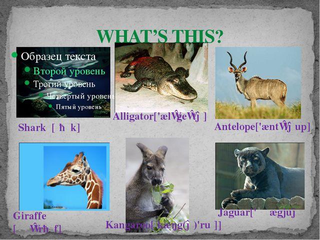 WHAT'S THIS? Kangaroo[ˌkæŋg(ə)'ruː] Alligator['ælɪgeɪtə] Giraffe [ʤɪ'rɑːf]...