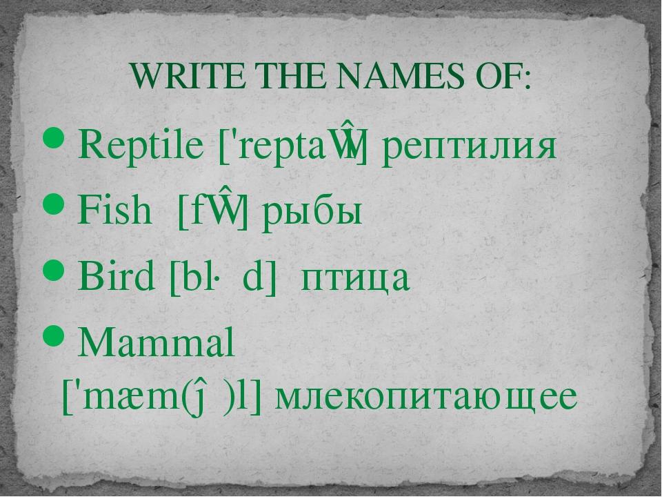 Reptile ['reptaɪl] рептилия Fish [fɪʃ]рыбы Bird [bɜːd] птица Mammal ['mæm(ə...