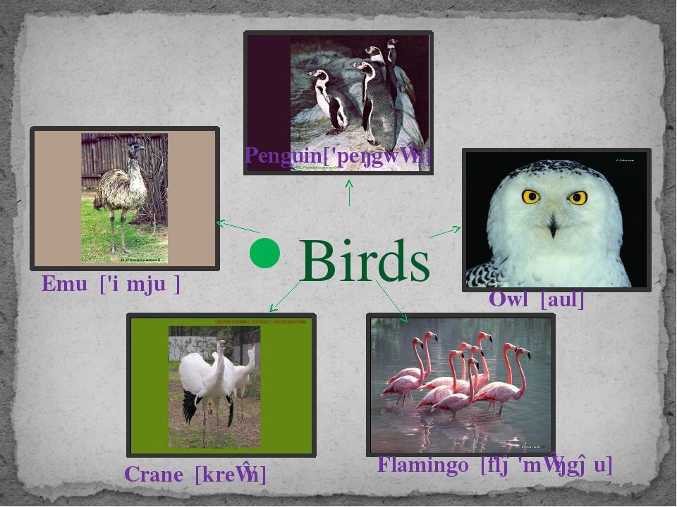 Birds Owl [aul] Flamingo [flə'mɪŋgəu] Crane [kreɪn] Emu ['iːmjuː] Penguin['...