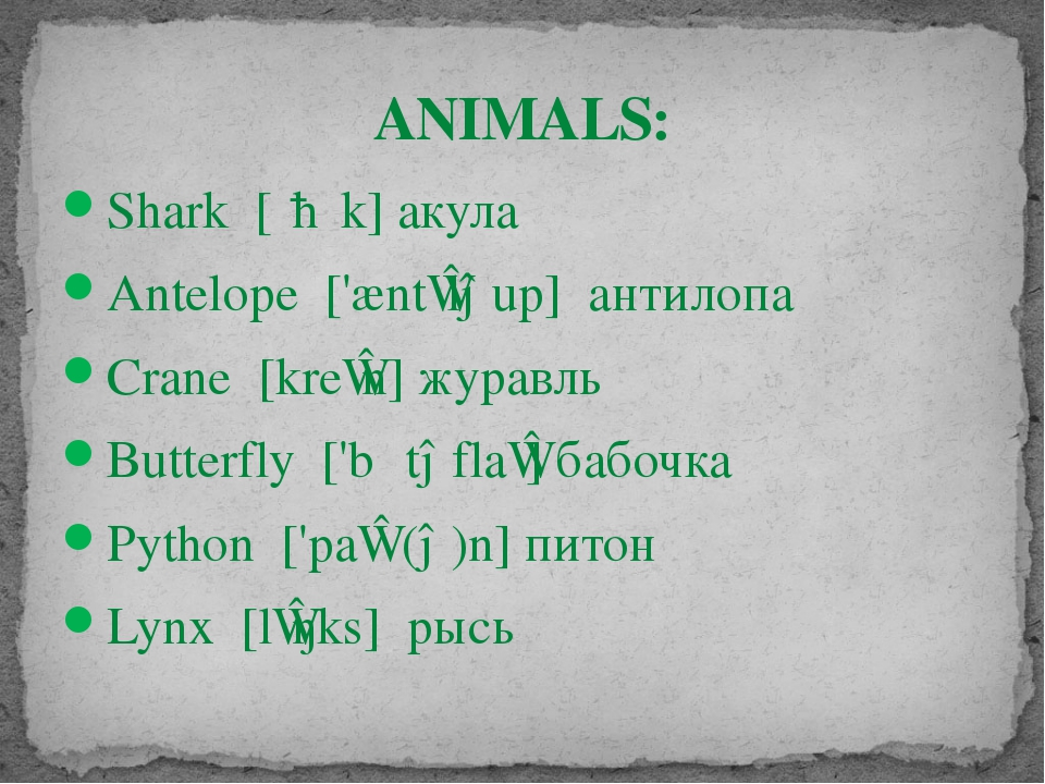 ANIMALS: Shark [ʃɑːk] акула Antelope ['æntɪləup] антилопа Crane [kreɪn] жура...