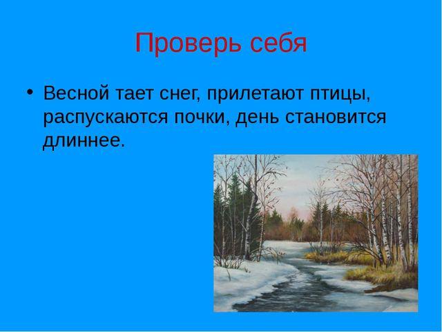 Проверь себя Весной тает снег, прилетают птицы, распускаются почки, день стан...