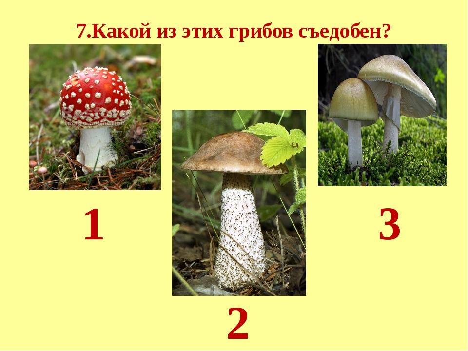 7.Какой из этих грибов съедобен? 1 2 3