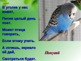 Попугай В уголке у нас живет, Песни целый день поет. Может птица говорить, Ес