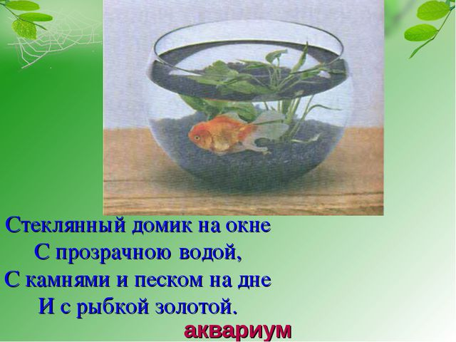 Стеклянный домик на окне С прозрачною водой, С камнями и песком на дне И с ры...
