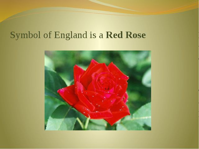Symbol of England is a Red Rose