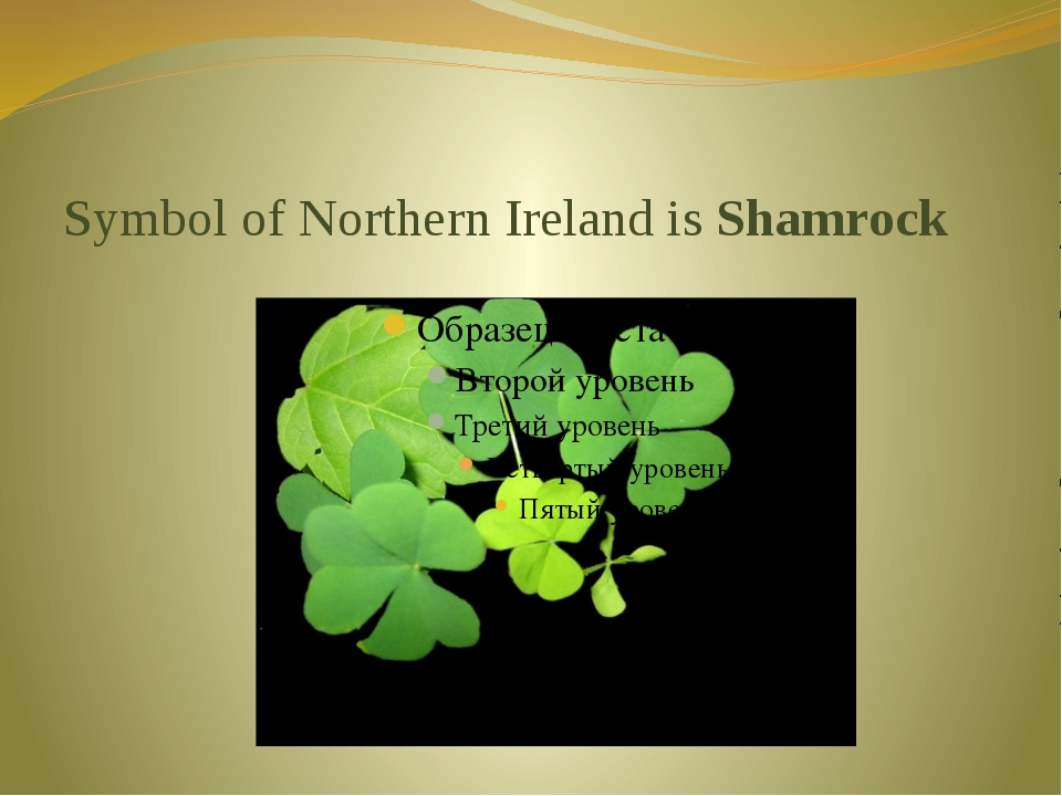 Symbol of Northern Ireland is Shamrock