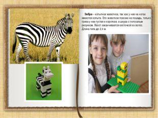 Зебра – копытное животное, так как у нее на ногах имеются копыта. Это животн