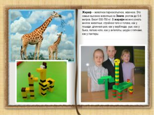 Жираф – животное парнокопытное, жвачное. Это самые высокие животные на Земле,