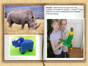 Носорог - самое большое на суше после слона животное. Но почему его называют