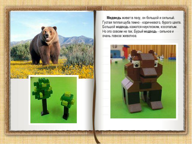 Медведь живет в лесу, он большой и сильный. Густая теплая шуба темно - корич...