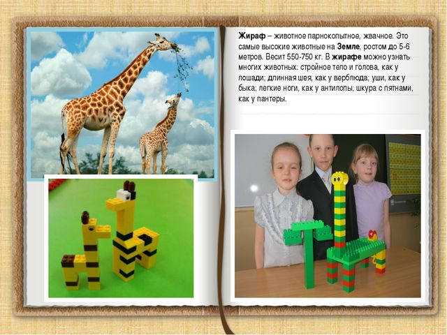 Жираф – животное парнокопытное, жвачное. Это самые высокие животные на Земле,...