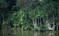 Фото : Амазонка : Амазонка. Вид 1