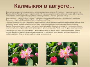 Калмыкия в августе… Если посетите нашу республику летом, то попадете на цвете