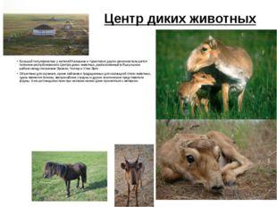 Центр диких животных Большой популярностью у жителей Калмыкии и туристов из д