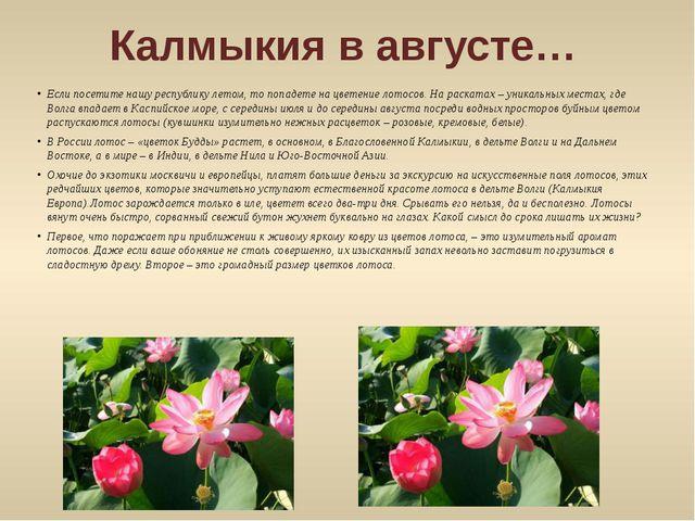 Калмыкия в августе… Если посетите нашу республику летом, то попадете на цвете...