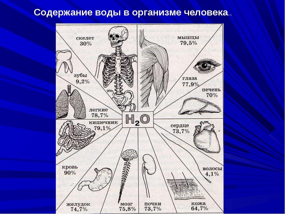 Содержание воды в организме человека..