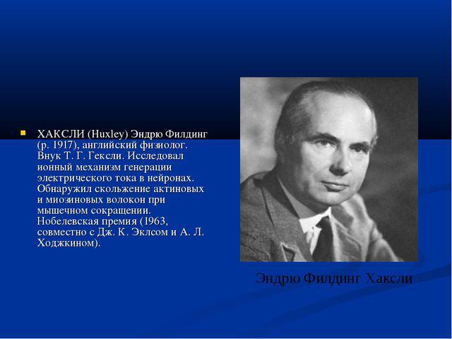 ХАКСЛИ (Huxley) Эндрю Филдинг (р. 1917), английский физиолог. Внук Т. Г. Гекс...