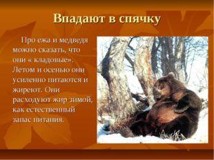 Впадают в спячку Про ежа и медведя можно сказать, что они « кладовые». Летом