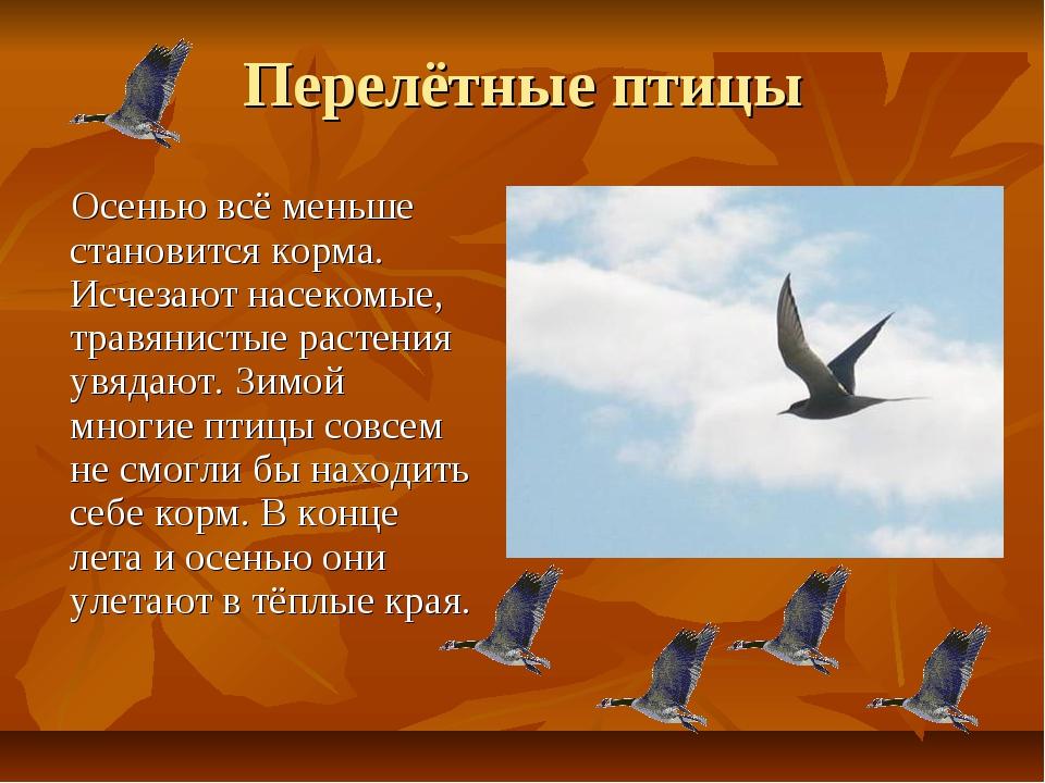 Перелётные птицы Осенью всё меньше становится корма. Исчезают насекомые, трав...