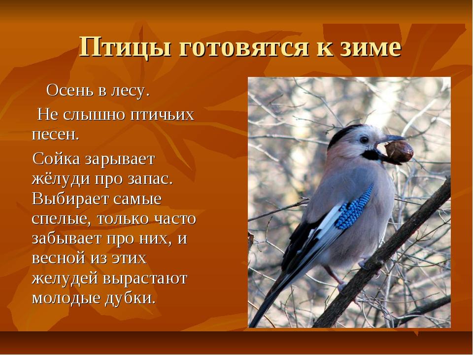 Птицы готовятся к зиме Осень в лесу. Не слышно птичьих песен. Сойка зарывает...