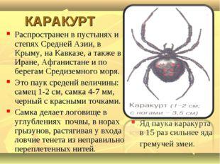 КАРАКУРТ Распространен в пустынях и степях Средней Азии, в Крыму, на Кавказе