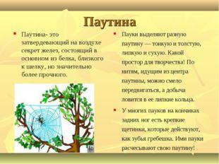 Паутина Паутина- это затвердевающий на воздухе секрет желез, состоящий в осно