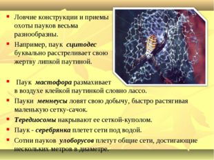 Ловчие конструкции и приемы охоты пауков весьма разнообразны. Например, паук