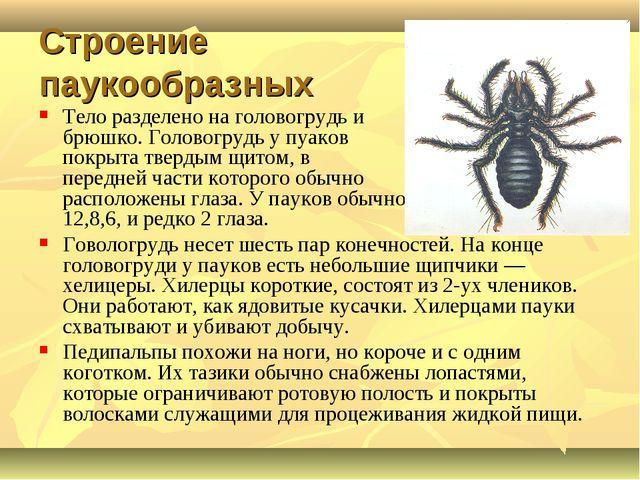 Строение паукообразных Тело разделено на головогрудь и брюшко. Головогрудь у...