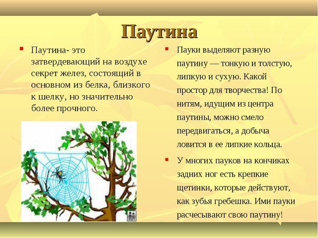 Паутина Паутина- это затвердевающий на воздухе секрет желез, состоящий в осно...