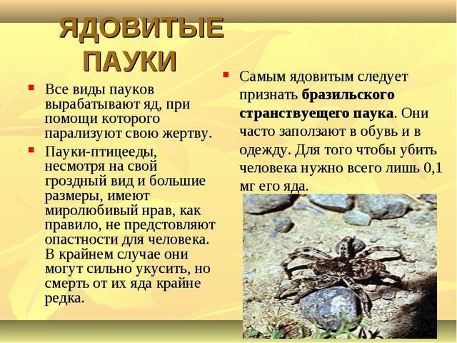 ЯДОВИТЫЕ ПАУКИ Все виды пауков вырабатывают яд, при помощи которого парализу...