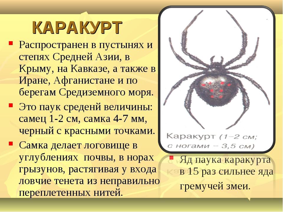 КАРАКУРТ Распространен в пустынях и степях Средней Азии, в Крыму, на Кавказе...