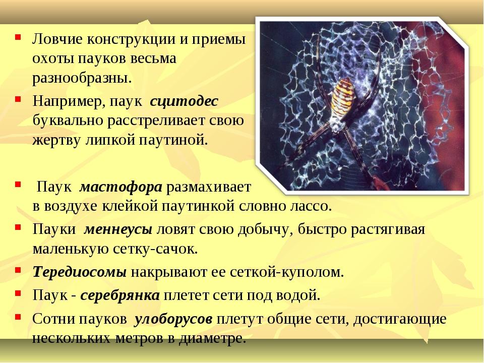Ловчие конструкции и приемы охоты пауков весьма разнообразны. Например, паук...
