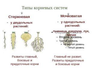 Стержневая у двудольных растений: фасоль, горох, яблоня, дуб. Мочковатая у од