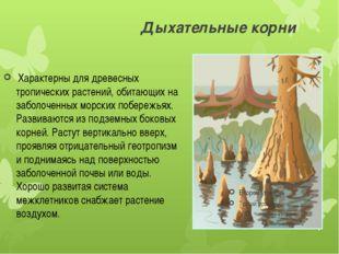 Дыхательные корни Характерны для древесных тропических растений, обитающих н
