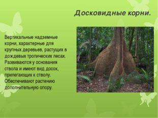 Досковидные корни. Вертикальные надземные корни, характерные для крупных дере