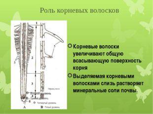 Корневые волоски увеличивают общую всасывающую поверхность корня Выделяемая к