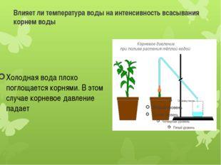 Влияет ли температура воды на интенсивность всасывания корнем воды Холодная в