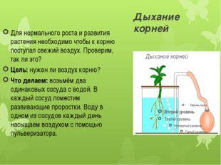 Дыхание корней Для нормального роста и развития растения необходимо чтобы к к