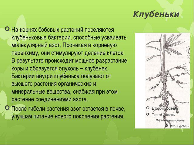 Клубеньки На корнях бобовых растений поселяются клубеньковые бактерии, способ...