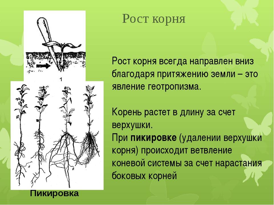 Рост корня всегда направлен вниз благодаря притяжению земли – это явление гео...