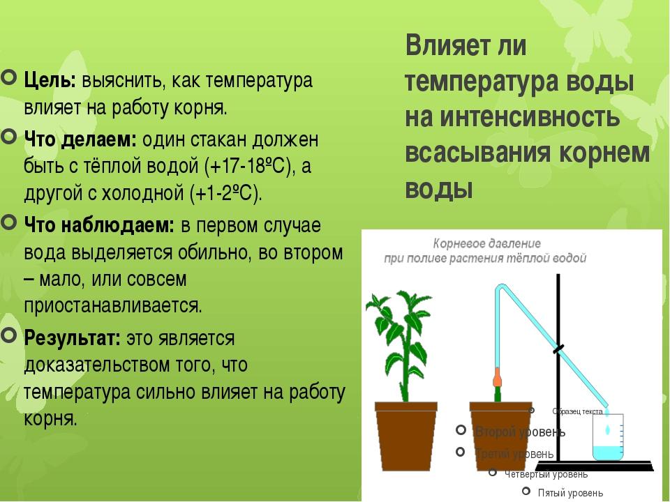 Влияет ли температура воды на интенсивность всасывания корнем воды Цель:выяс...