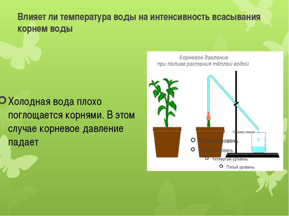 Влияет ли температура воды на интенсивность всасывания корнем воды Холодная в...