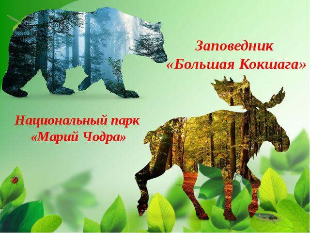 Заповедник «Большая Кокшага» Национальный парк «Марий Чодра»