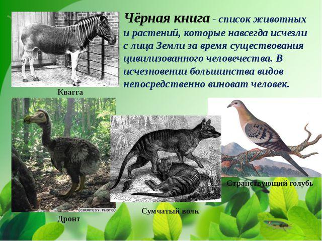 Чёрная книга - список животных и растений, которые навсегда исчезли с лица З...