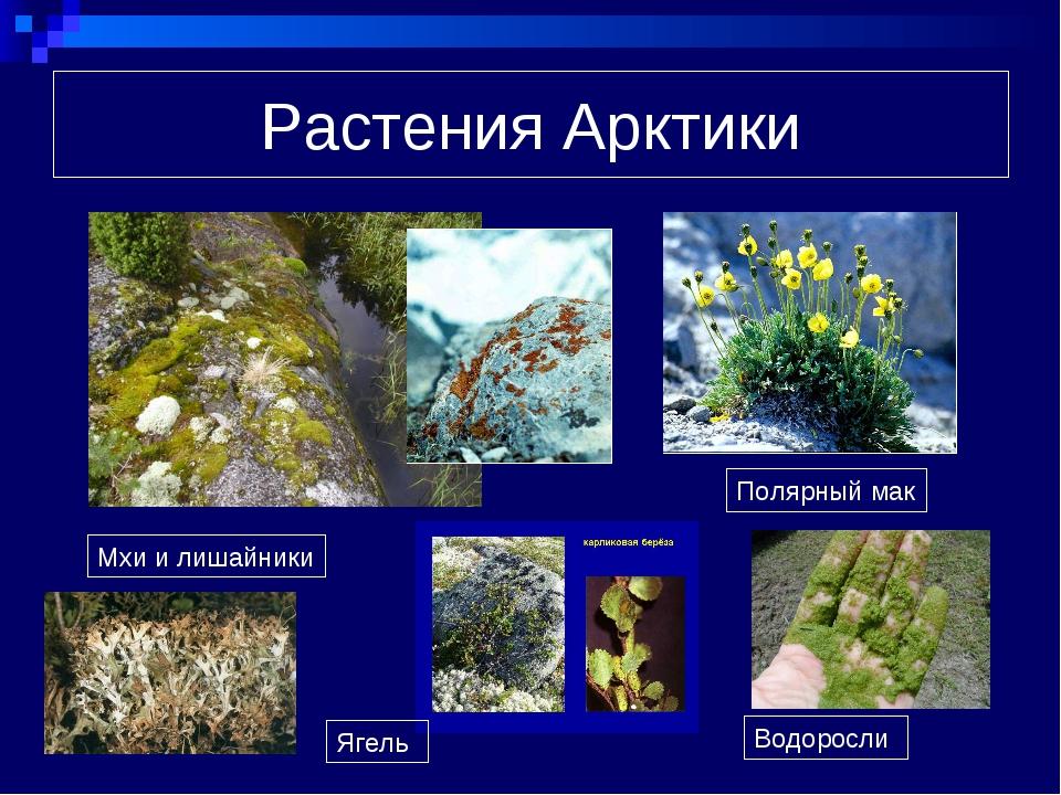 растения арктики картинки с названиями обеих компаний сохраняются