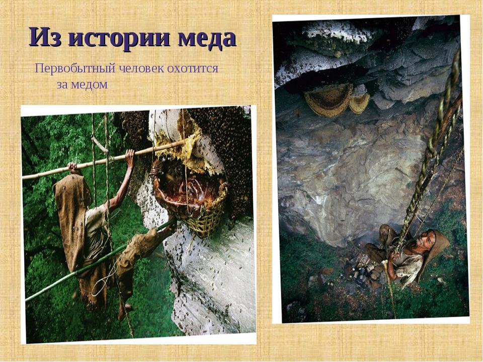 Из истории меда Первобытный человек охотится за медом