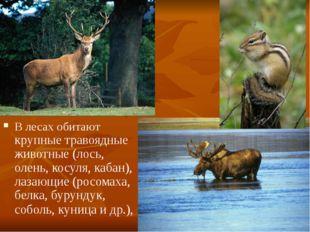 В лесах обитают крупные травоядные животные (лось, олень, косуля, кабан), лаз